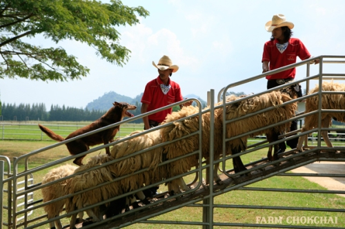 Farm Chockchai tours in khao yai