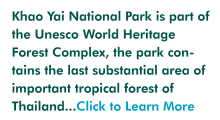 More on Khao Yai national park